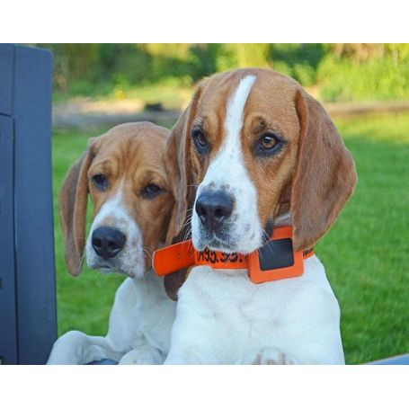 Tracker GPS Weenect pour chiens