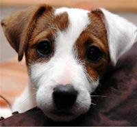 1001innovations au salon des chiens paris 2011