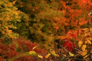 L'automne s'adoucit avec Bouillotte Magique!