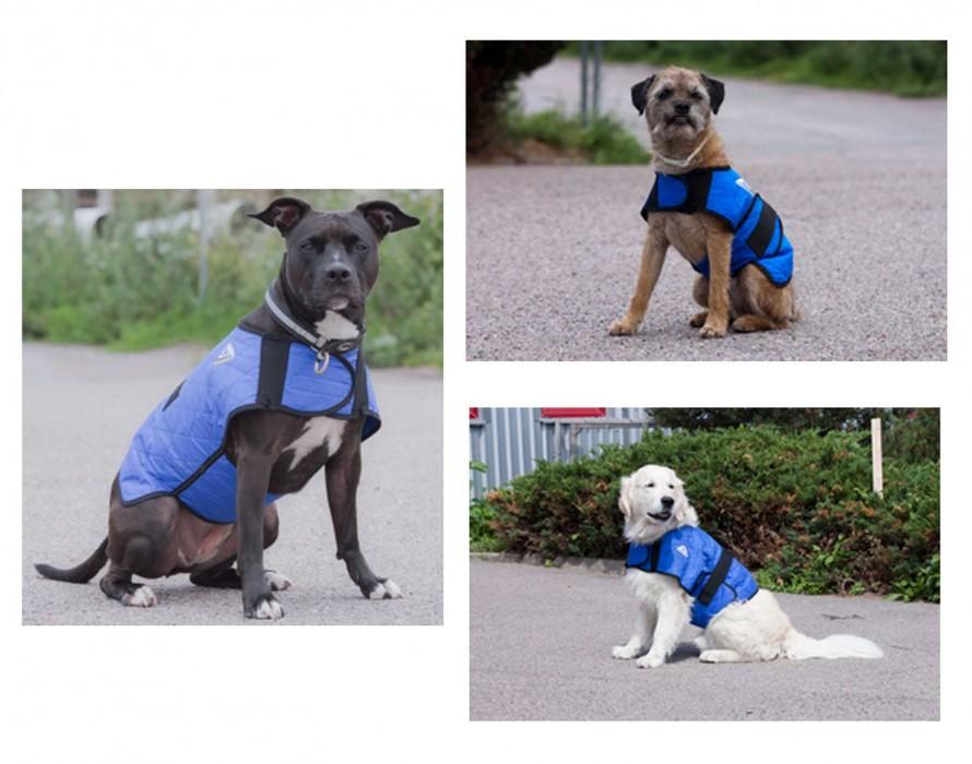 Manteau rafraichissant Hyperkewl… pour chien !