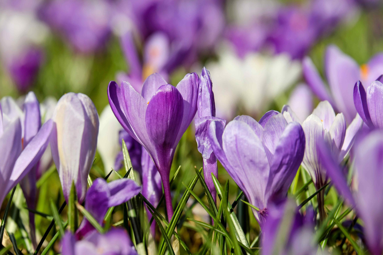 Les vertus du grand ménage de printemps