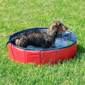 Piscine gonflable pour animaux