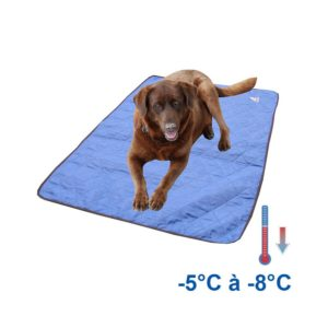 Tapis rafraîchissant chien bleu