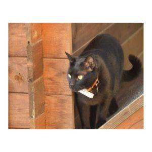 Le tracker GPS Weenect chats est très pratique lorsque vous partez en vacances pour retrouver facilement votre animal de compagnie préféré.